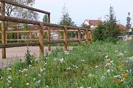 Baradel Paysage - Le végétal
