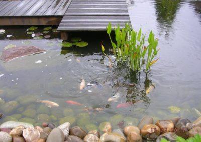 baradel-eau-bassin-et-ponton (8)