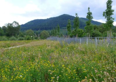 baradel-prairie-fleurie (3)