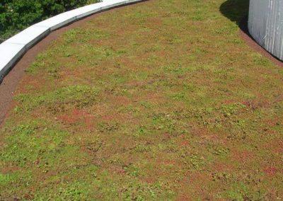 carre-potager-sur-eleve (14)
